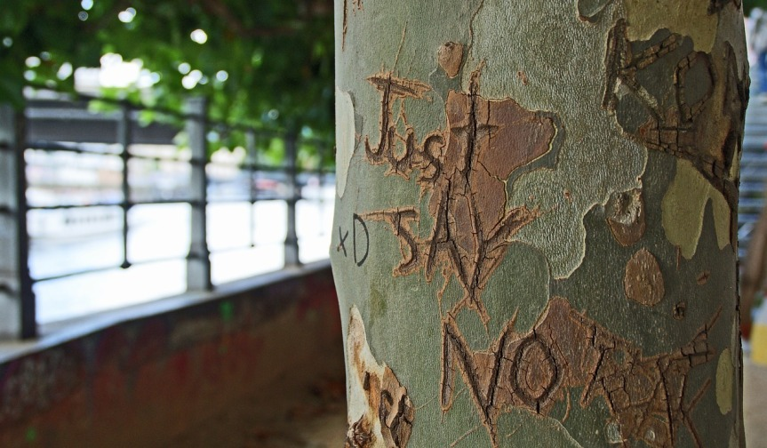 Tree with 'Just SAY NO carved into bark